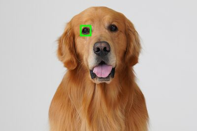 Eye AF para animales mediante actualización de software